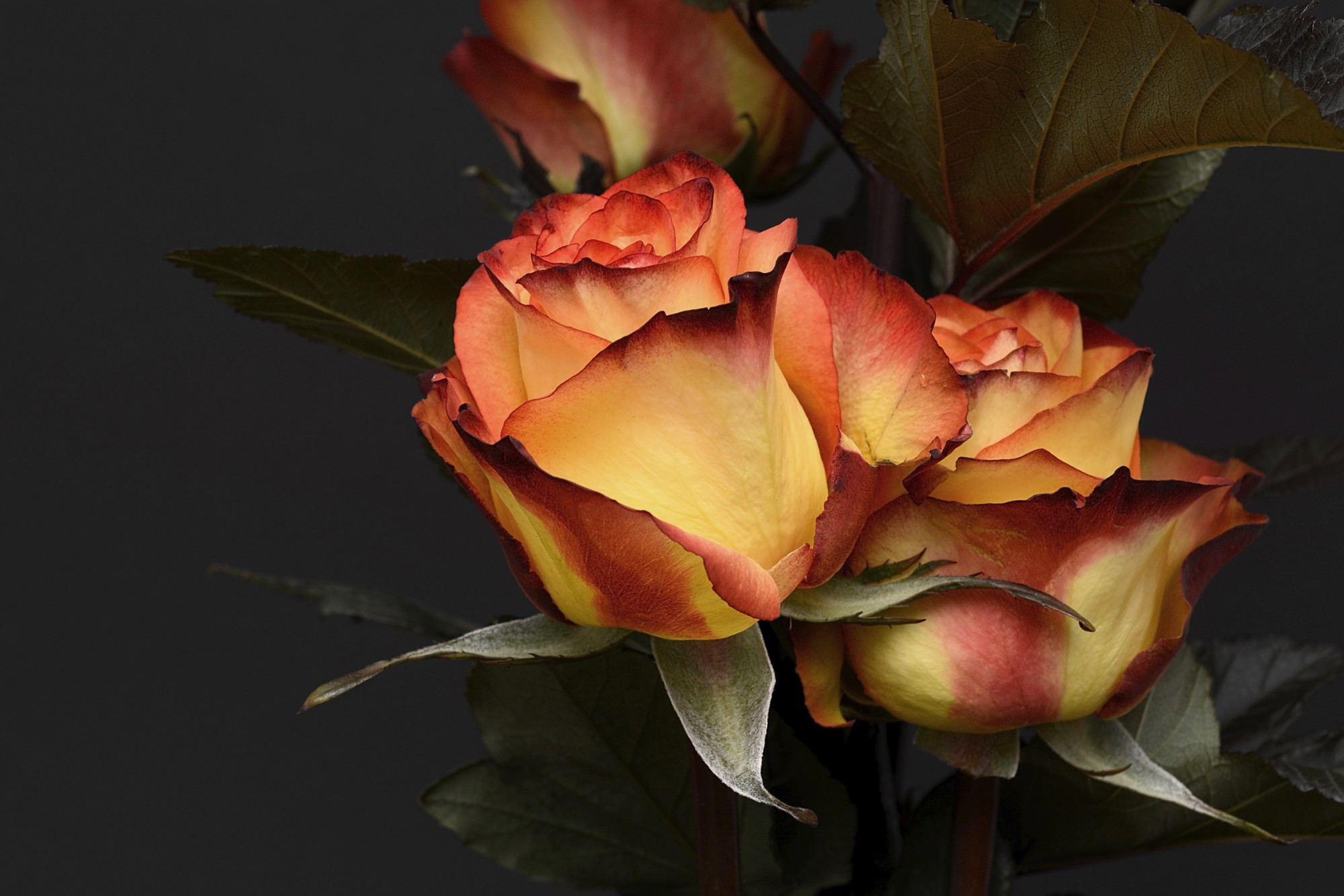 Romantic flowers and their meanings